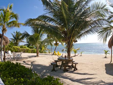 Palms provide shade at Villa Mandala vacation rental home on the Riviera Maya