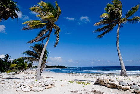 Beach and palm trees near  La Via 5 BR Akumal vacation rental villa